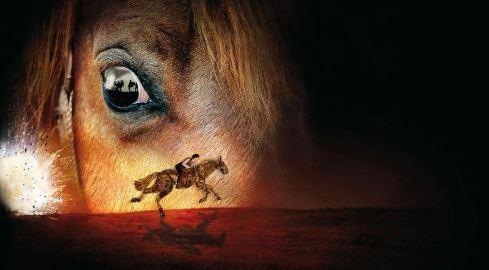 war horse 2.JPG